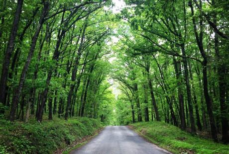 Green Ridge Forest